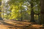 Luxe weekendje weg -- herfstkleuren