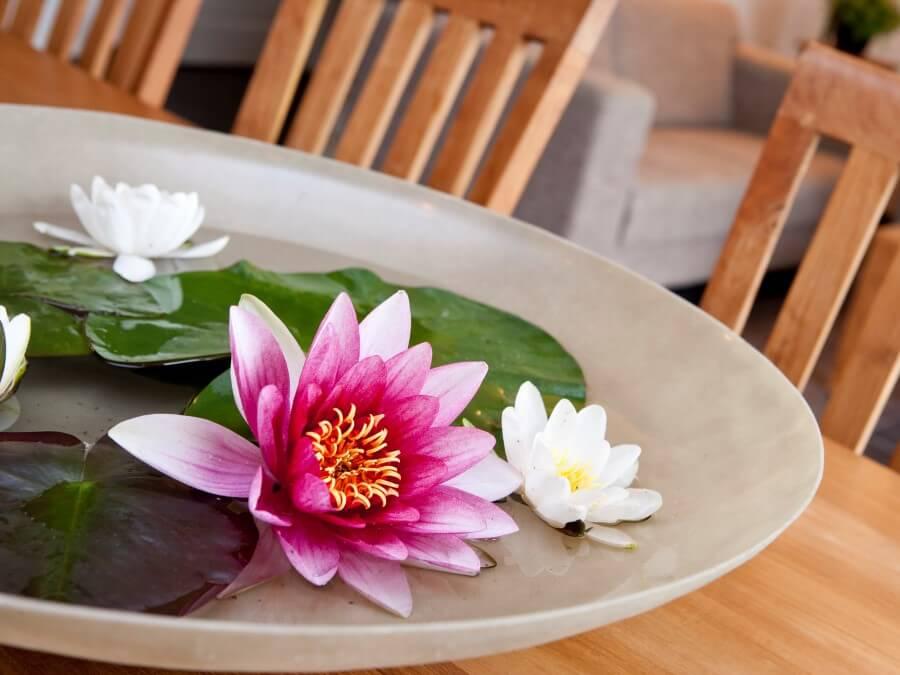 Waterleilies zo uit de sloot op je tafel
