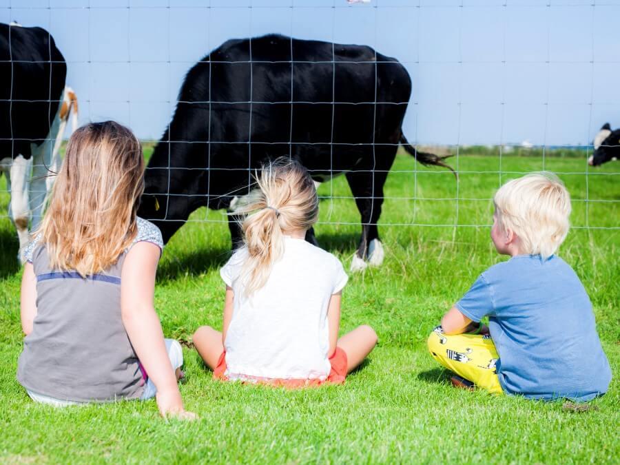 Kinderen die bij de koeien kijken
